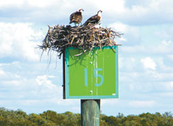 A few days after this photo was taken daymark 15 went missing, complete with nest, eggs and osprey.