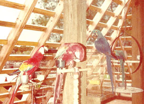 An assortment of Judy's birds sit inside the house while still under construction.