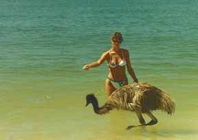 At one point, Judy had five emus at Cape Romano, all raised by her since they were babies.