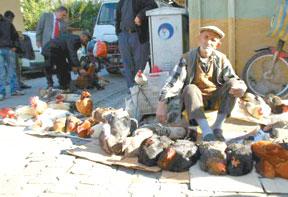 Turkey sales in Istanbul.