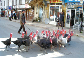 Turkey merchant in Istanbul.