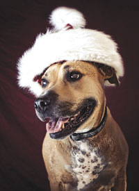 Tony Wakefield-Jones isn't the only canine who poses for professional photo shoots.