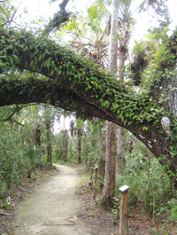 Walk the boardwalk at Collier-Seminole while humming along to the bluegrass tunes.Photos by Natalie Strom