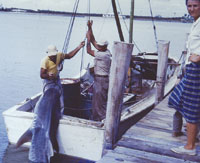 A Tiger shark being pulled out of the water by Francis Howard assisted by Roger Johnson on the block and tackle, and Francis' sister, Lois (Howard) Crews on the dock. PHOTOS BY Dave Johnson