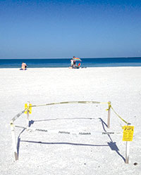 Sea turtle nest posted on South Beach. photoS by NANCY RICHIE