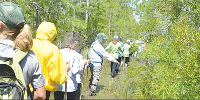 The students headed out en masse to Big Cypress, and they came prepared with mosquito nets.
