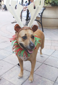 Pets on Parade brings out Marco's best-dressed dogs.