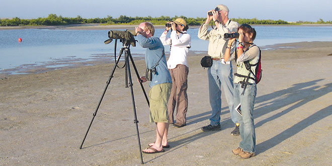 Birding for Beginners  field trip at Sand Dollar Island. SUBMITTED PHOTOS