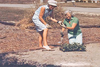 Submitted PhotoClub president Dorothy Johnston and member Peg Lambert plant the parking lot garden (circa 1984).