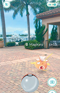 Also caught at the Esplanade, a Magikarp.