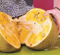 Cut open, jackfruit reveals sweet, edible fleshy pods.