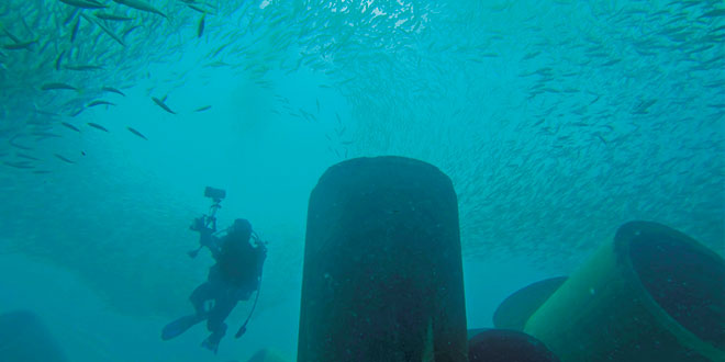 As time passes, the artificial reefs become part of the underwater landscape.